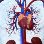 cardio-system